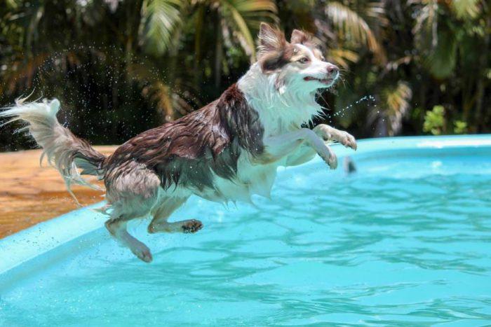Bassin pour votre chien