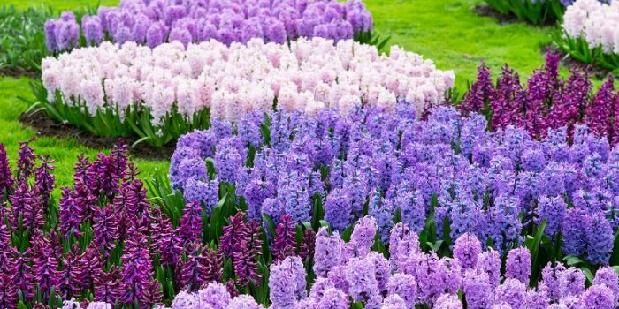 Quelles plantes préférer pour un jardin fleuri toute l'année ?