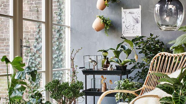 concevoir un jardin d'intérieur
