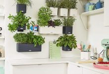 Créer son propre mur végétal d'herbes fraiches