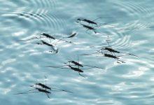 7 conseils pour éviter l'invasion des moustiques cet été