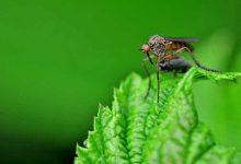 6 astuces pour se débarrasser des moustiques en extérieur