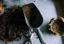 Comment bien planter ses arbres, arbustes et haies ?