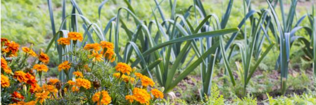 L'association de culture : une solution profitable pour les cultivateurs