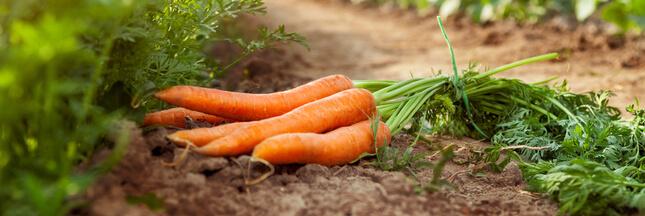 L'association de culture améliore le goût des plantes