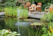 Mare à poisson : comment l'intégrer à votre jardin ?
