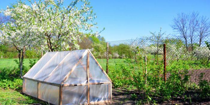 Comment construire une mini-serre dans son jardin?