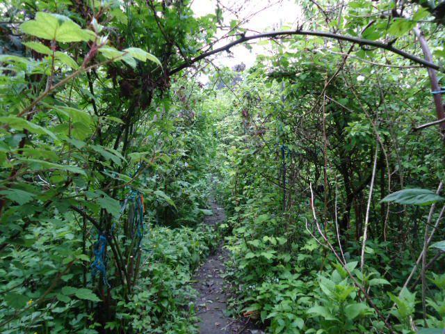 Avantages d'une forêt comestible