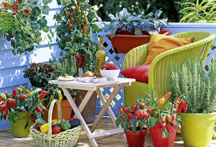 Les variétés de plantes à cultiver sur le balcon