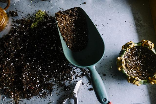 Ayez le réflexe d'arroser et de nourrir vos plantes