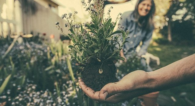 Comment débuter dans le jardinage ?