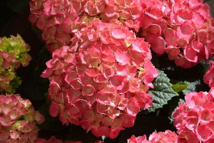 Les plantes à fleurs à adopter dans son jardin