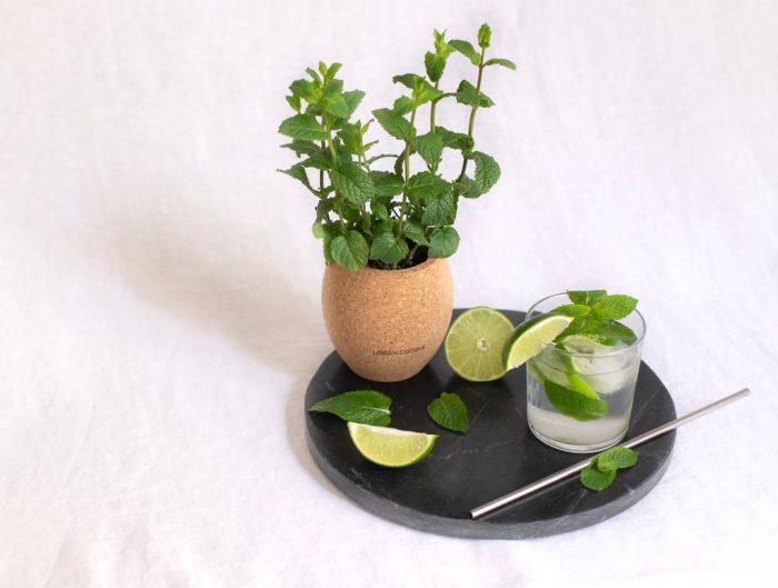 herbes aromatiques bio avec urban cuisine