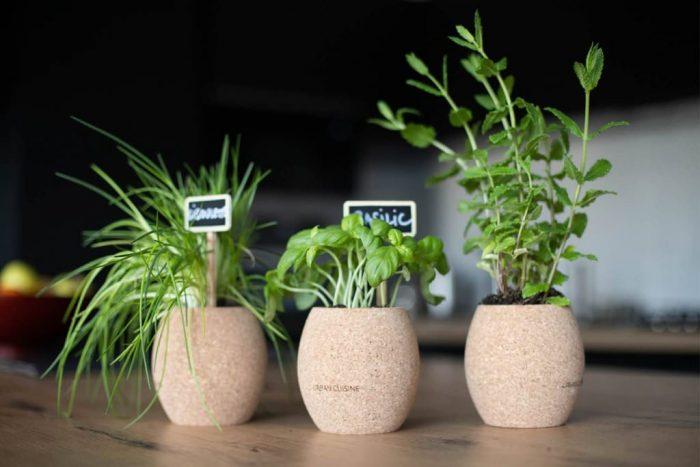 herbes aromatiques bio en intérieur
