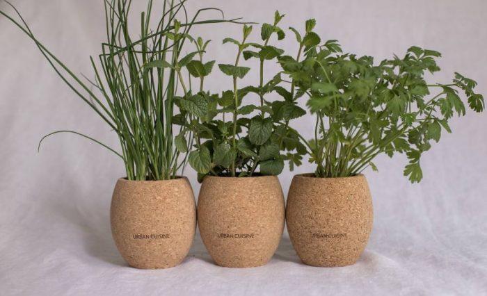 cultiver des plantes aromatiques à la maison