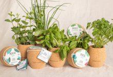 Comment cultiver des plantes aromatiques à la maison ?